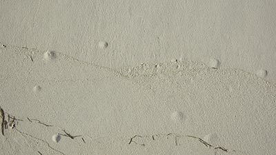 Why Concrete Blisters Form & How To Avoid Them